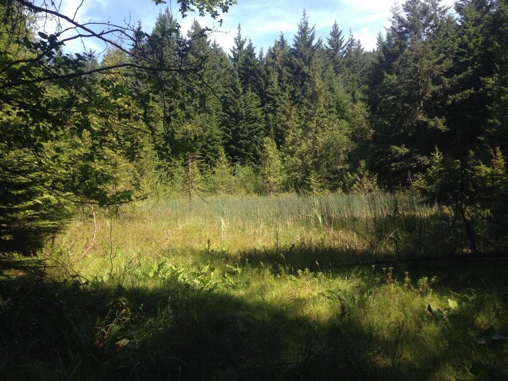 Fairy Fen--A view over the wetland