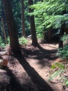 Fair Fen - Trail over Crown Land