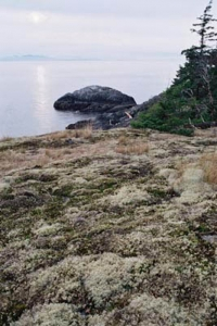 Old moss on rocks at the Cape