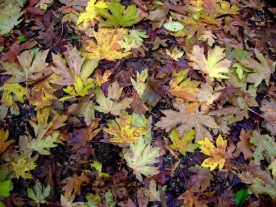 Fall leaves at the Cape