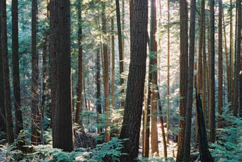 Deciduous and coniferous trees line the shoreline path around Cape Roger Curtis