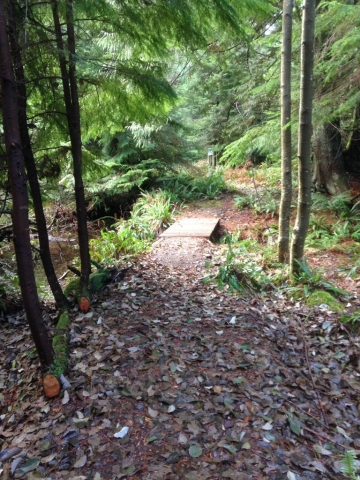 Singing Woods - the new bridge and upgraded trail into the Reserve