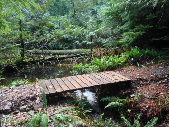 Singing Woods - the new bridge into the Reserve