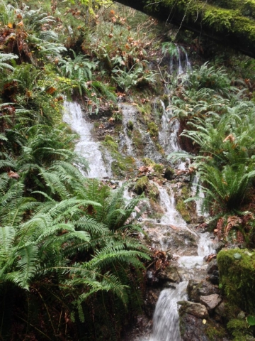 Singing Woods - the lower waterfall