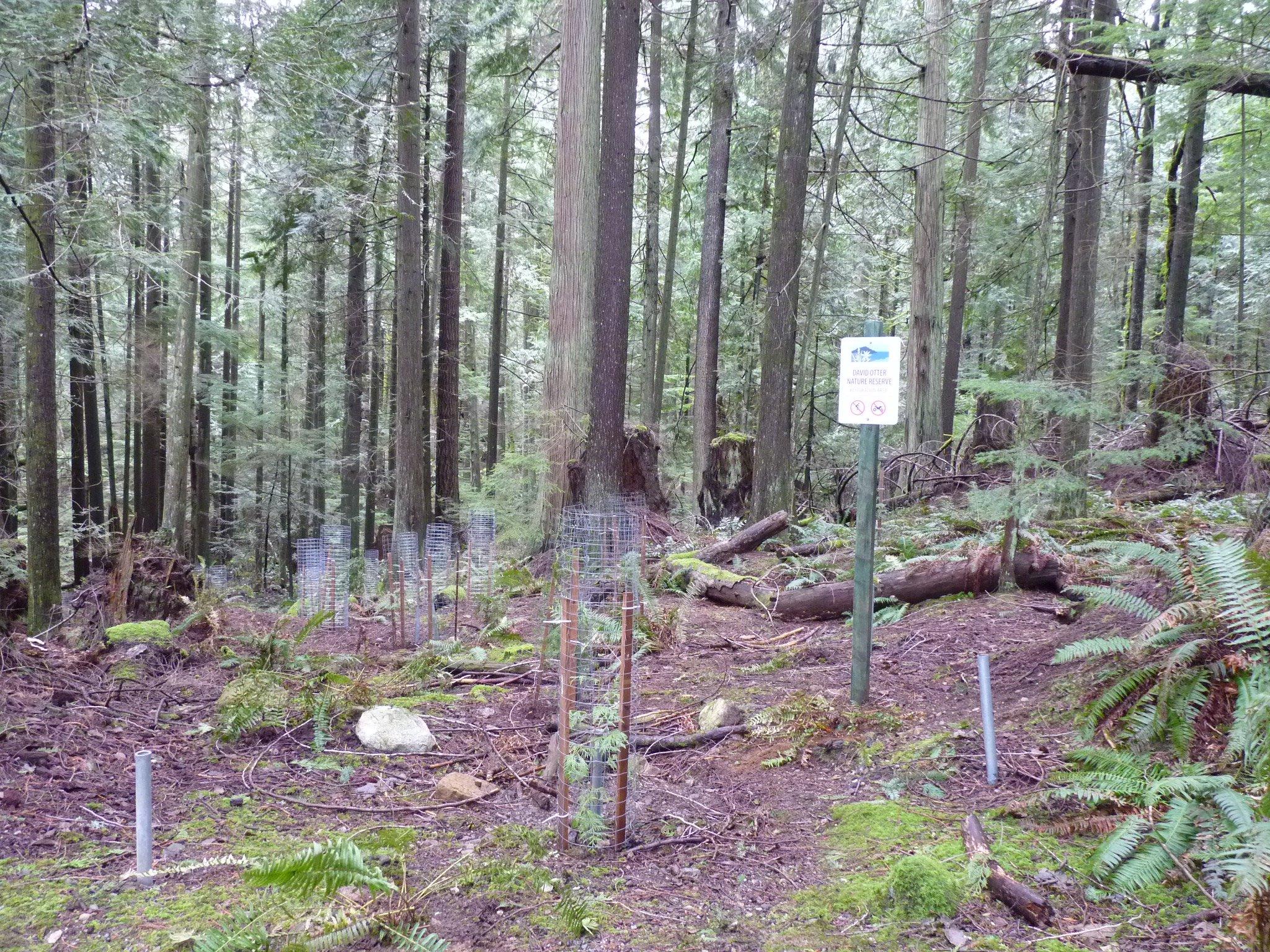 Restoration work-David Otter Nature Reserve (February 2017)