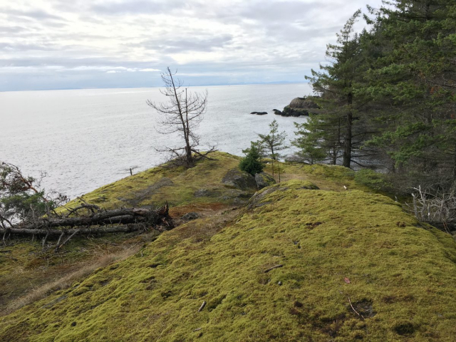 Mossy bluffs on the way to Apodaca Park